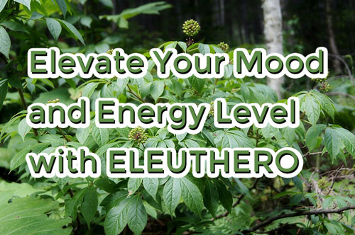 Elevate Your Mood and Energy Level with Eleuthero