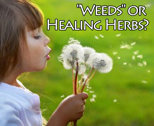 Weeds or Healing Herbs