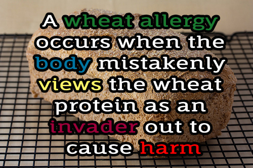 Wheat Allergy Natural Treatment
