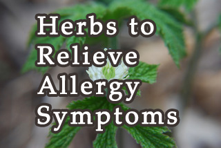 Herbs to Relieve Allergy Symptoms